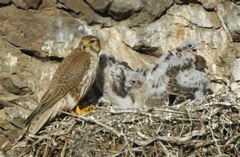 falconsnest2